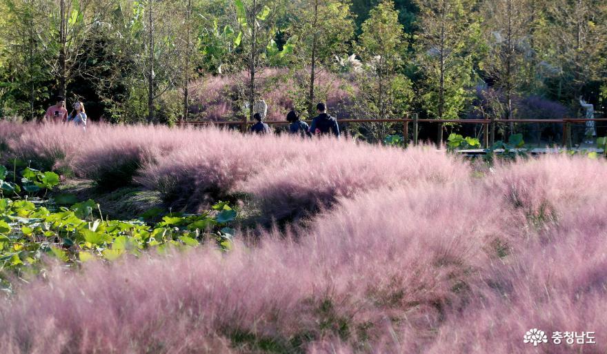 태안군, '가을 꽃 한가득!' 각종 꽃 축제 큰 호응!