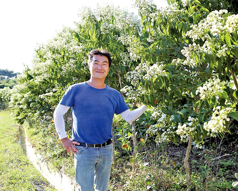 1년에 두 번 피는 황후의 꽃 '칠자화'…원산지 중국 진출 눈앞