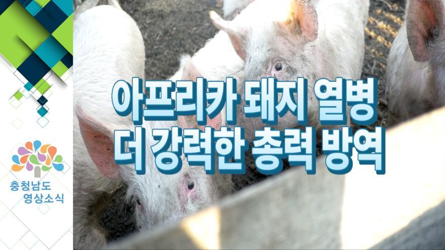 [NEWS] 아프리카 돼지열병 더 강력한 총력 방역