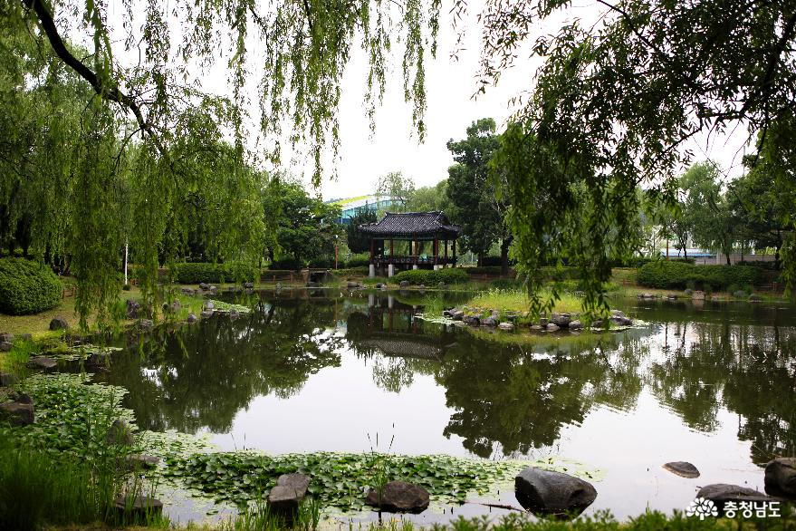 천안삼거리에 역사수목 '버드나무 테마원' 조성 2