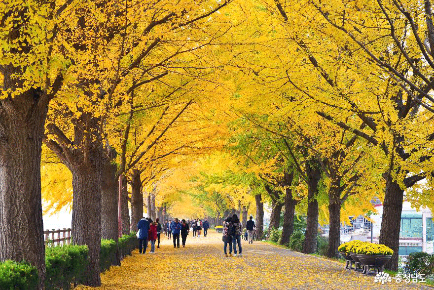 진정한 가을의 정취, 아산시에서 느끼다