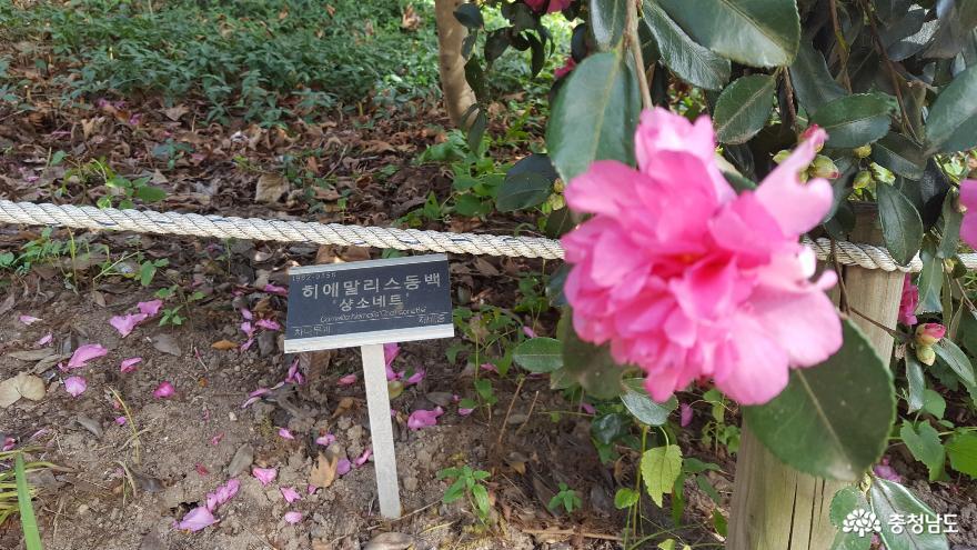 꿈의 천리포수목원에 다녀오다 8