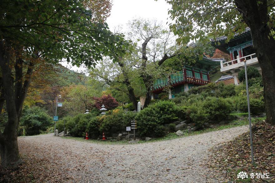 아름다운 가을이 찾아온 천안 광덕사와 호두