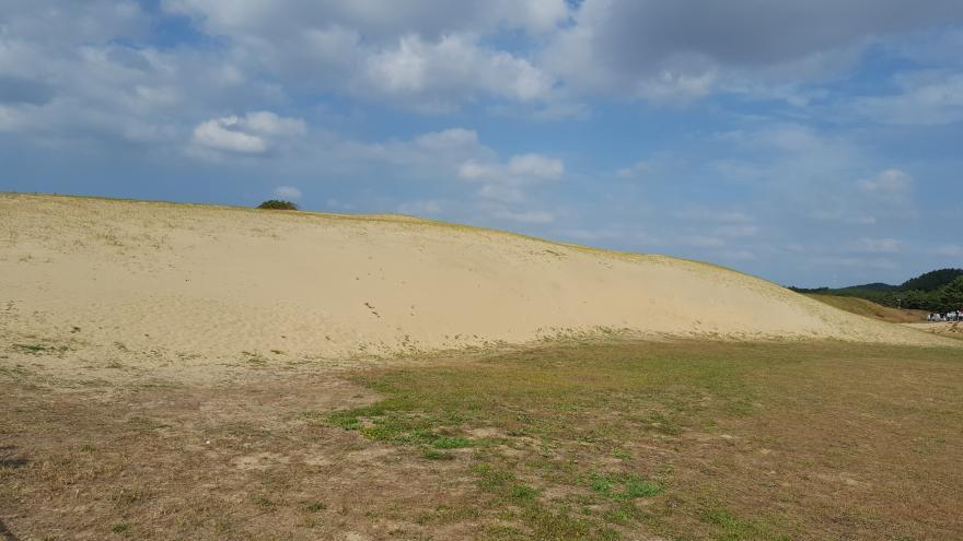 감탄사가 절로 나오는 국내 최대의 모래언덕 신두리 해안사구! 5