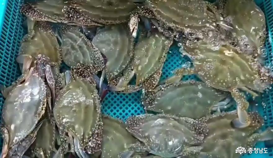 서천 수산물 특화시장에서 싱싱한 해산물을 맛보세요~