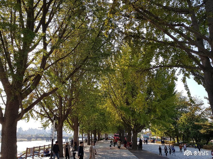 아산 은행나무길축제에서 가을을 느껴 보세요