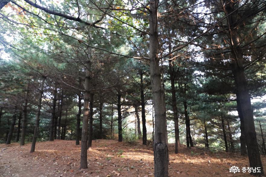 오색빛깔 가을 단풍과 해질녁 노을풍경이 예쁜  영인산 12
