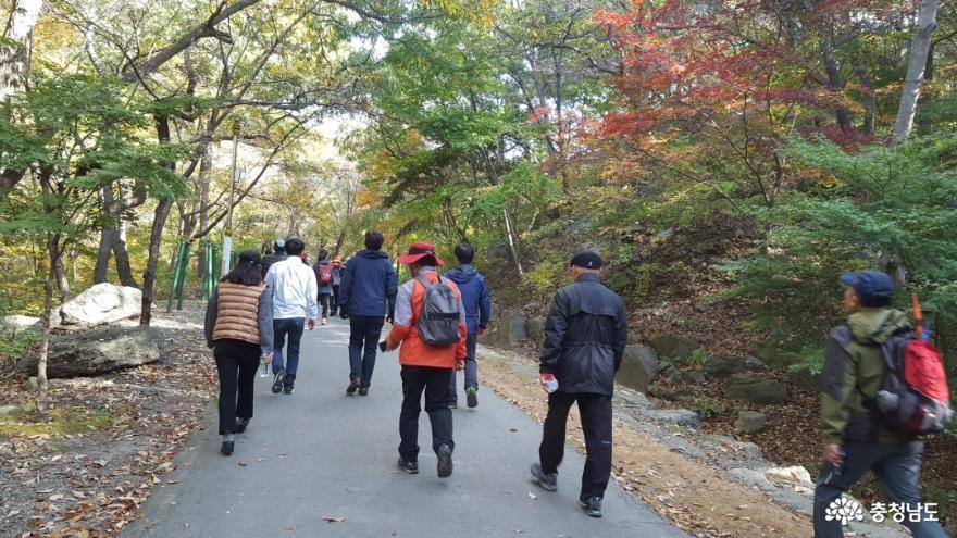 관광객을 보듬는 성주산 단풍길 걷기대회 3