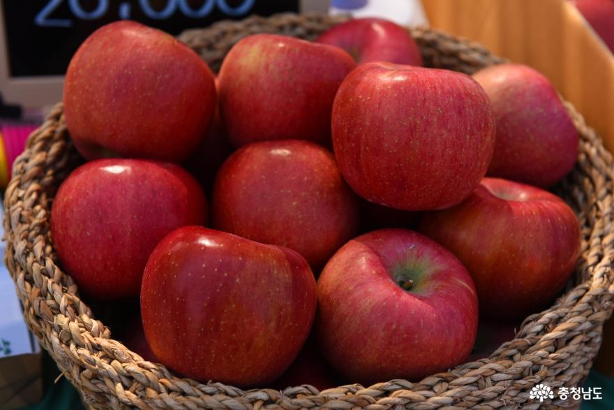 사과향기 가득한 예산황토사과축제