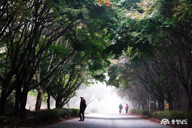 단풍단풍 독립기념관 새벽 단풍길 산책, 이 시간에만 만날 수 있는 아름다운 풍경