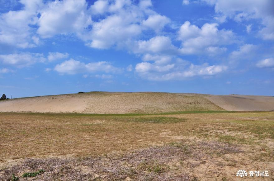 신두리 해안사구 탐방로를 거닐며 사막과 같은 풍경을 즐기다 5