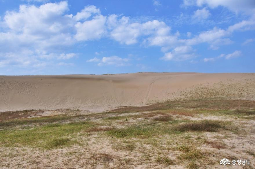 신두리 해안사구 탐방로를 거닐며 사막과 같은 풍경을 즐기다 6