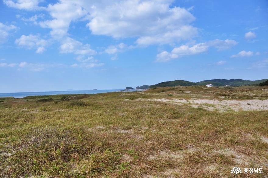 신두리 해안사구 탐방로를 거닐며 사막과 같은 풍경을 즐기다 11