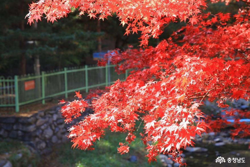단풍 만나기 좋은 가을, 성주산자연휴양림 상추객의 마음을 흔들다