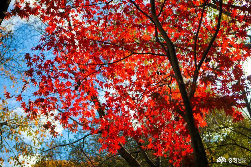 가을빛으로 곱게 물든 천안 성거산 성지둘레길을 걸으며 힐링해요!