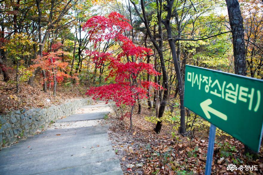 가을빛으로 곱게 물든 천안 성거산 성지둘레길을 걸으며 힐링해요! 4