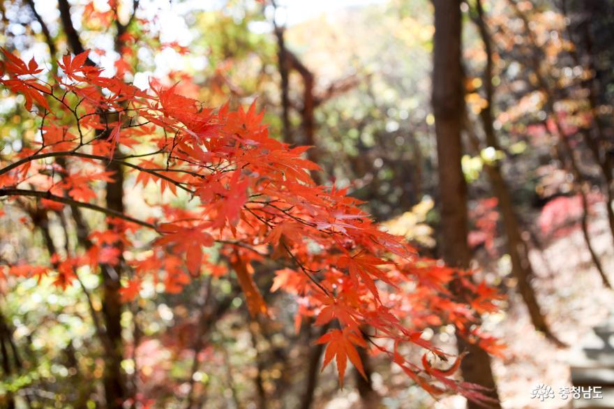 가을빛으로 곱게 물든 천안 성거산 성지둘레길을 걸으며 힐링해요! 7