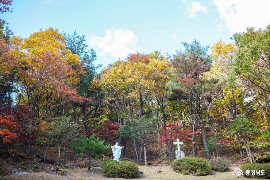 가을빛으로 곱게 물든 천안 성거산 성지둘레길을 걸으며 힐링해요! 8