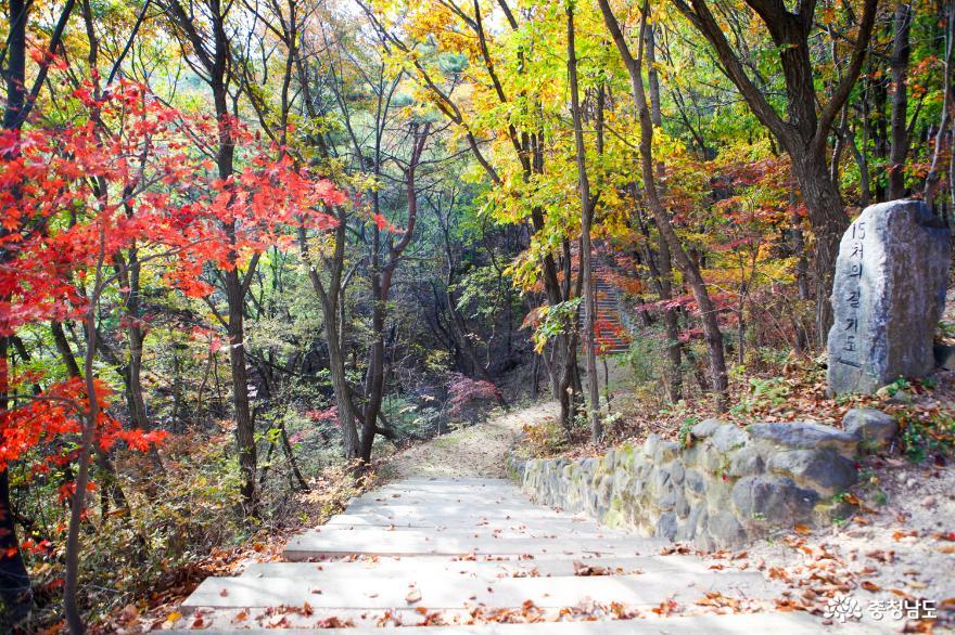 가을빛으로 곱게 물든 천안 성거산 성지둘레길을 걸으며 힐링해요! 9