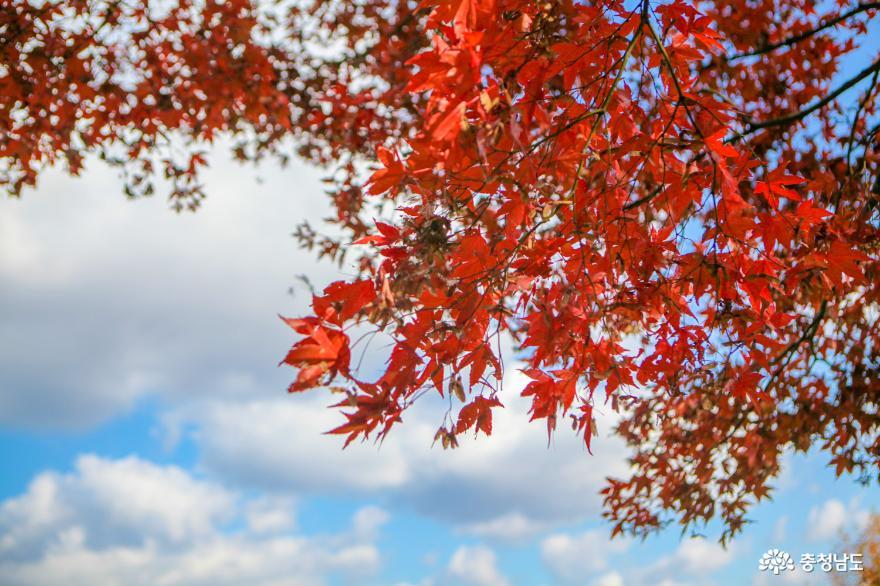 가을빛으로 곱게 물든 천안 성거산 성지둘레길을 걸으며 힐링해요! 10
