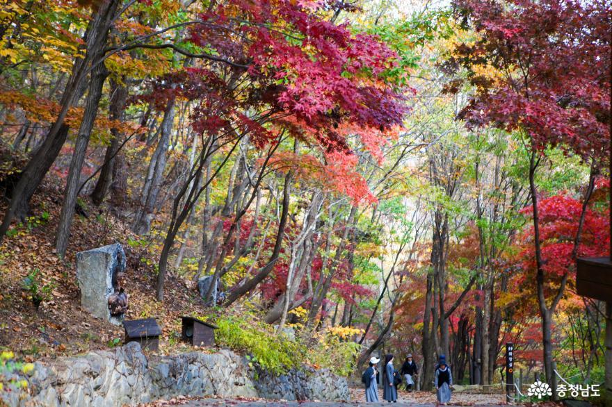 가을빛으로 곱게 물든 천안 성거산 성지둘레길을 걸으며 힐링해요! 12