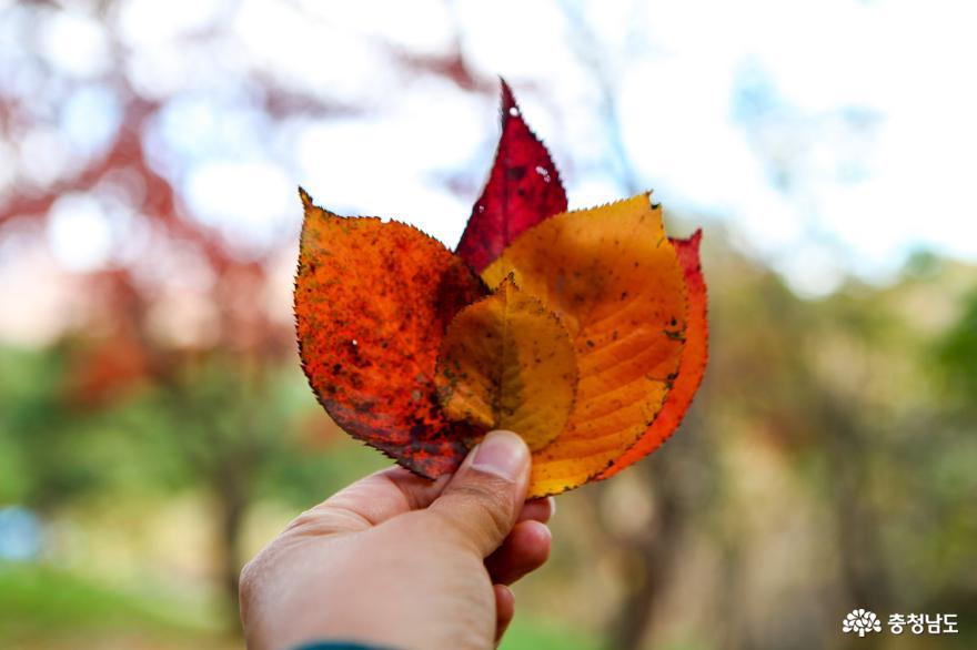 가을빛으로 곱게 물든 천안 성거산 성지둘레길을 걸으며 힐링해요! 14