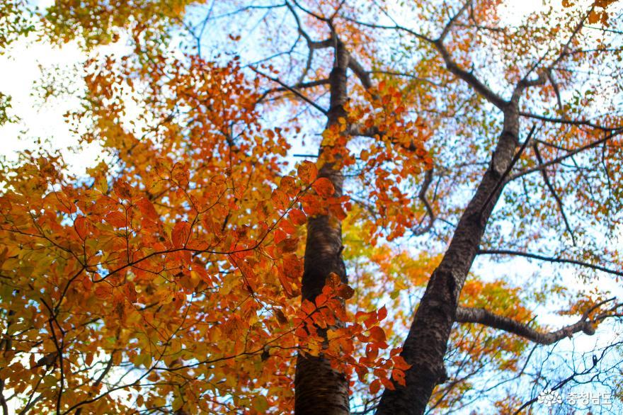 가을빛으로 곱게 물든 천안 성거산 성지둘레길을 걸으며 힐링해요! 15