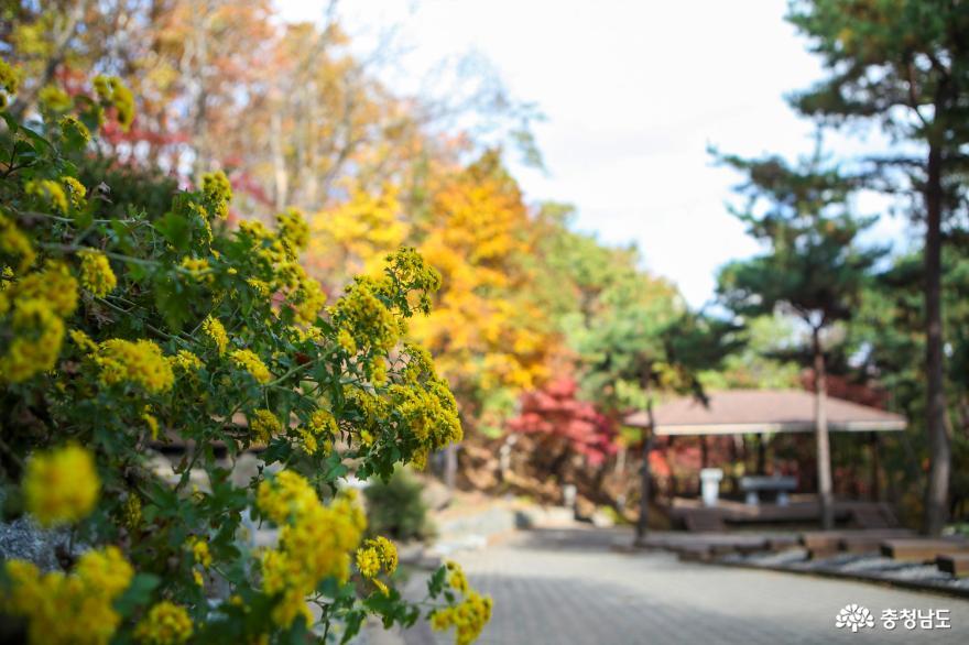 가을빛으로 곱게 물든 천안 성거산 성지둘레길을 걸으며 힐링해요! 19