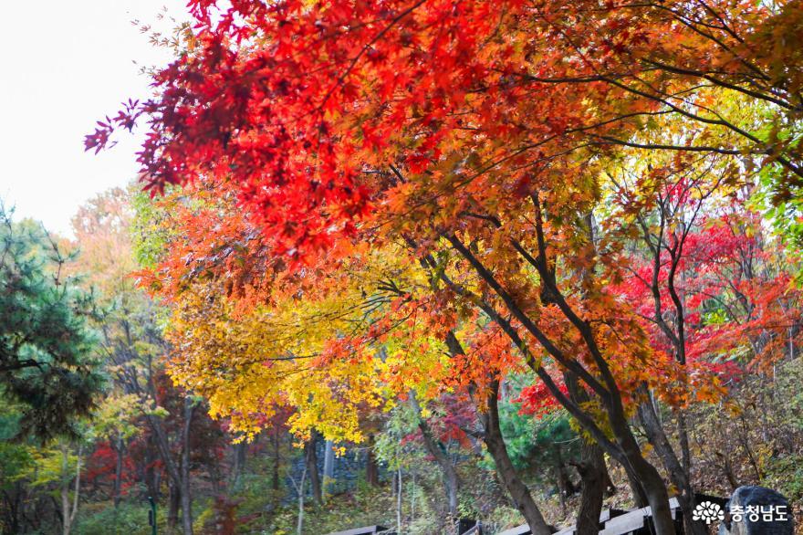 가을빛으로 곱게 물든 천안 성거산 성지둘레길을 걸으며 힐링해요! 20