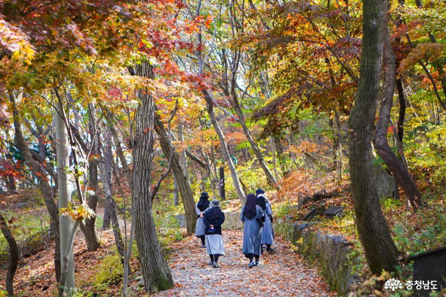 가을빛으로 곱게 물든 천안 성거산 성지둘레길을 걸으며 힐링해요! 21