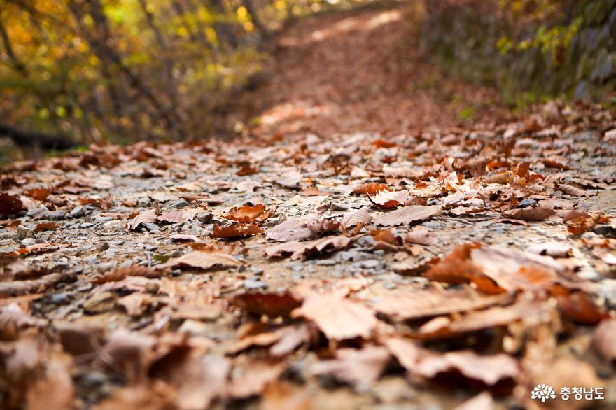 가을빛으로 곱게 물든 천안 성거산 성지둘레길을 걸으며 힐링해요! 22