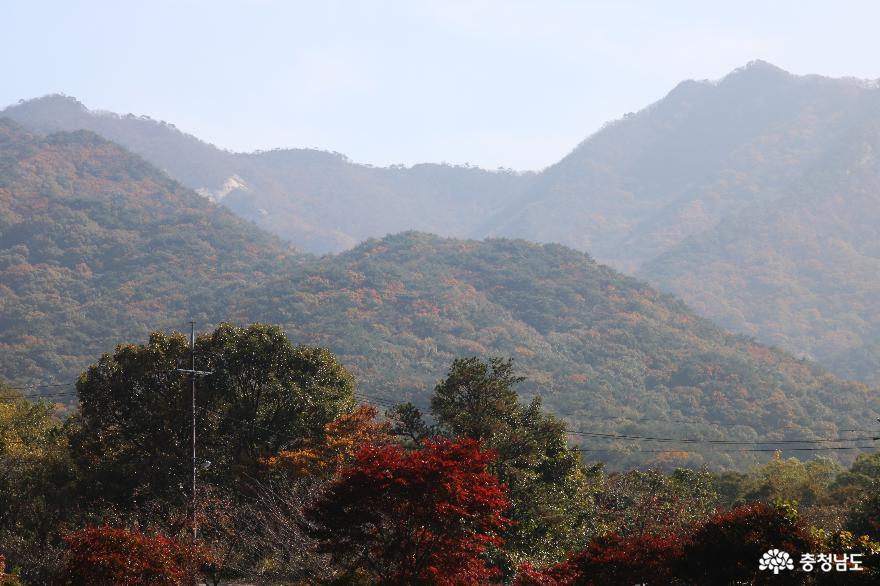 천년고찰 갑사에서 만난 진귀한 보물들과 맑고 깨끗한 자연 풍경 2