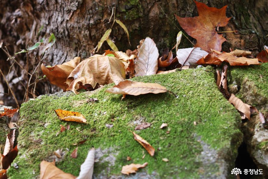 천년고찰 갑사에서 만난 진귀한 보물들과 맑고 깨끗한 자연 풍경 16