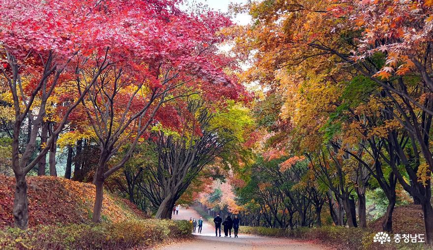 오색 추(秋)억 가득, 독립기념관 단풍나무길