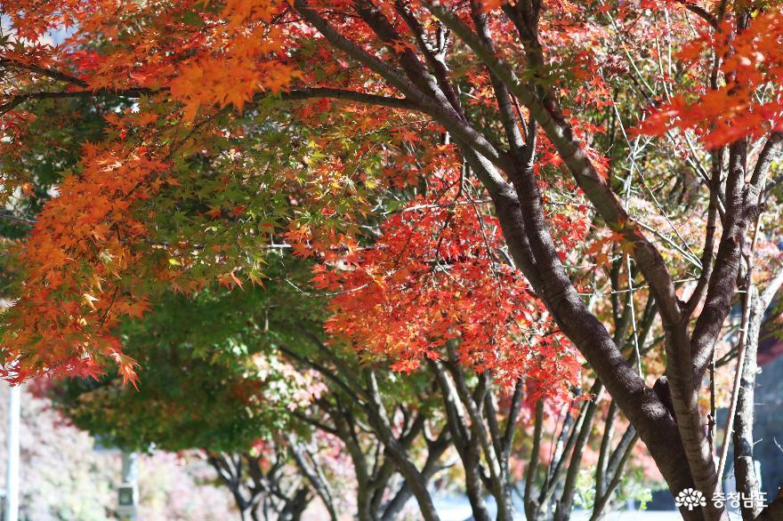가을 풍경이 예쁜 천안의 성불사, 만일사에서 보물 찾기! 3