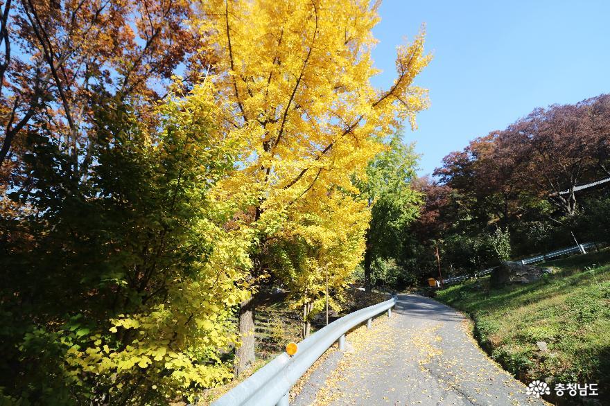 가을 풍경이 예쁜 천안의 성불사, 만일사에서 보물 찾기! 5