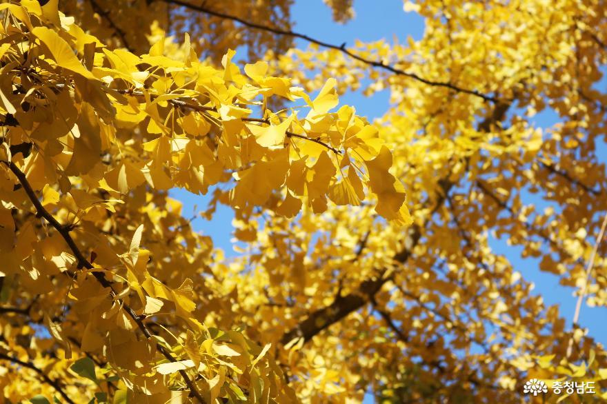가을 풍경이 예쁜 천안의 성불사, 만일사에서 보물 찾기! 6