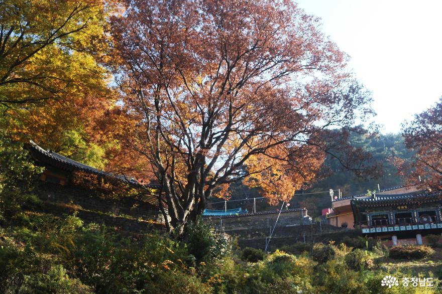 가을 풍경이 예쁜 천안의 성불사, 만일사에서 보물 찾기! 7