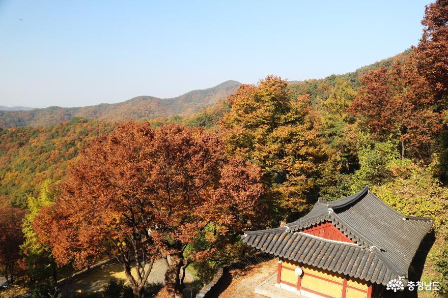 가을 풍경이 예쁜 천안의 성불사, 만일사에서 보물 찾기! 13