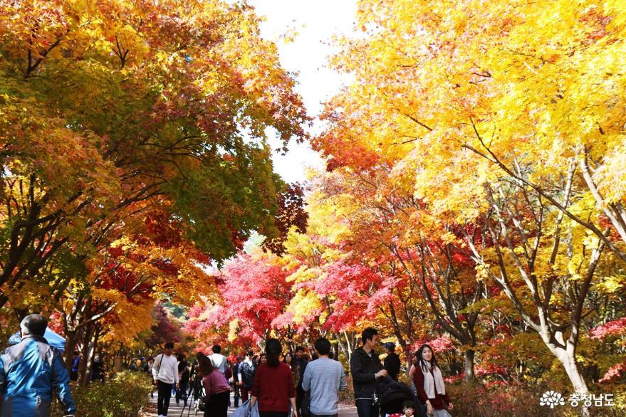 전국에서 모여드는 가을명소 독립기념관 힐링축제