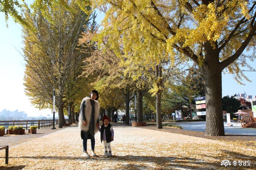 곡교천 갈대밭&은행나무길 가을풍경 속 추억남기기