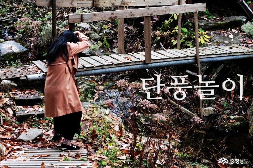 천안 자전거 타기 좋은 곳 단풍이 절정인 천흥저수지 둘레길 사진
