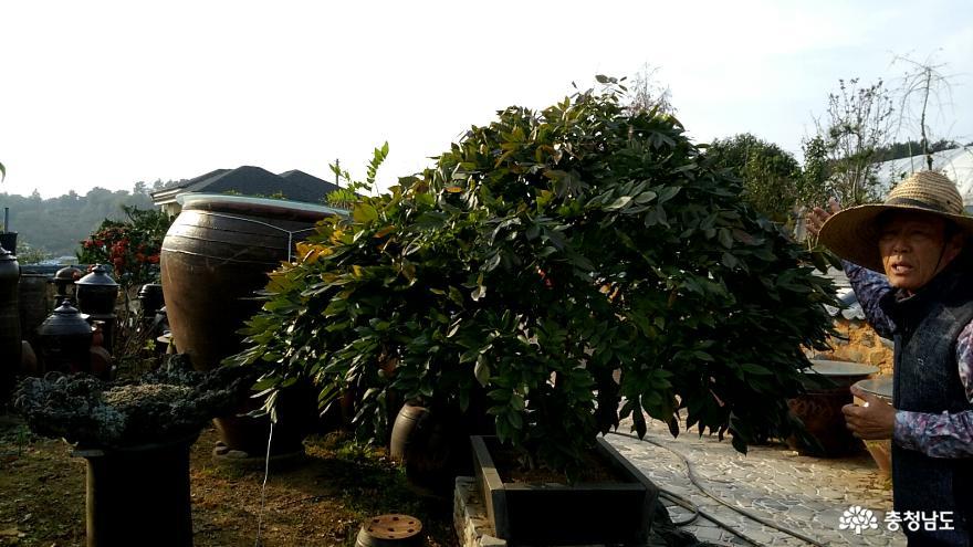 체험학습원 꿈꾸는 나무들, 서천식물예술원 3
