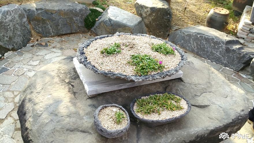 체험학습원 꿈꾸는 나무들, 서천식물예술원 19
