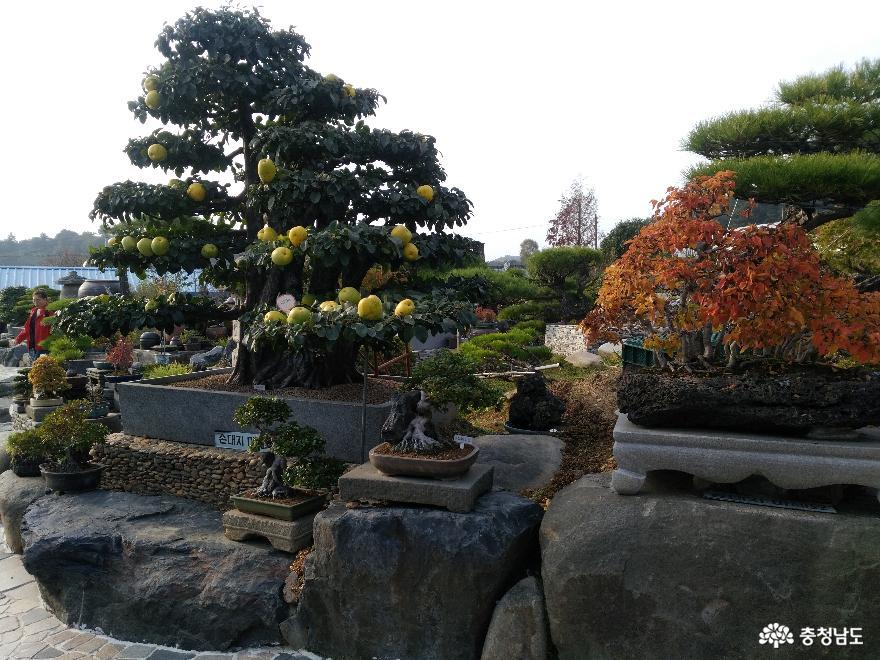 체험학습원 꿈꾸는 나무들, 서천식물예술원 20