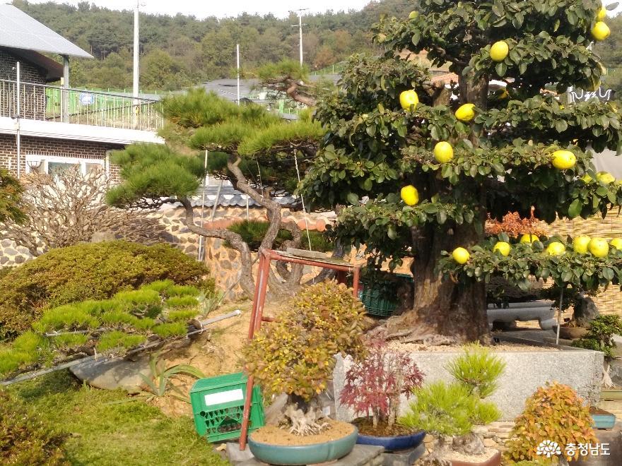 체험학습원 꿈꾸는 나무들, 서천식물예술원 21