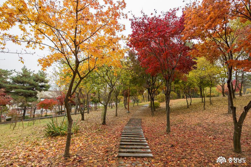 천안 시민의 숲 가을 풍경