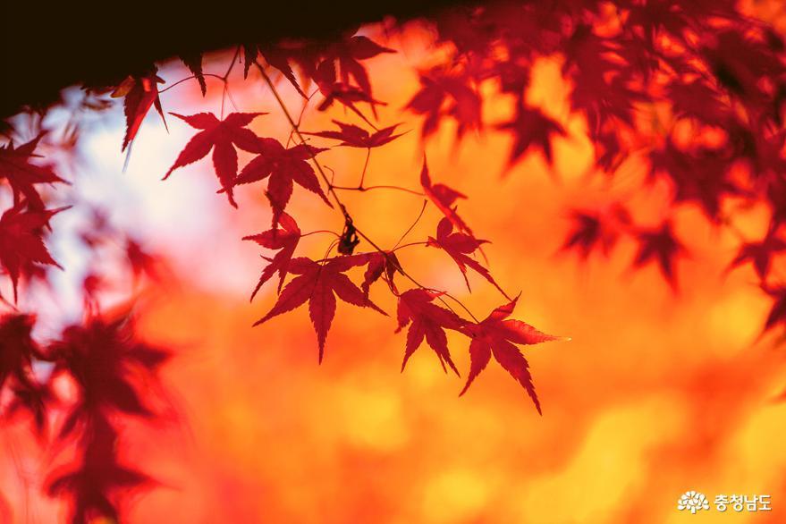 단풍나무숲길을 걸으며, 계절을 보내며…