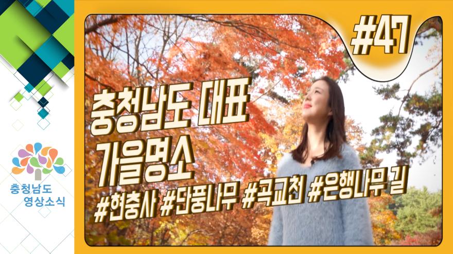 [VCR]충청남도 대표 가을명소 #현충사 #단풍나무 #곡교천 #은행나무길
