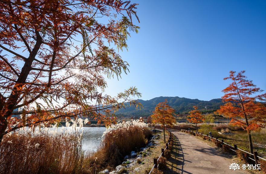 자작나무가 만들어주는 특별한 가을 풍경, 홍성 내포신도시 홍예공원